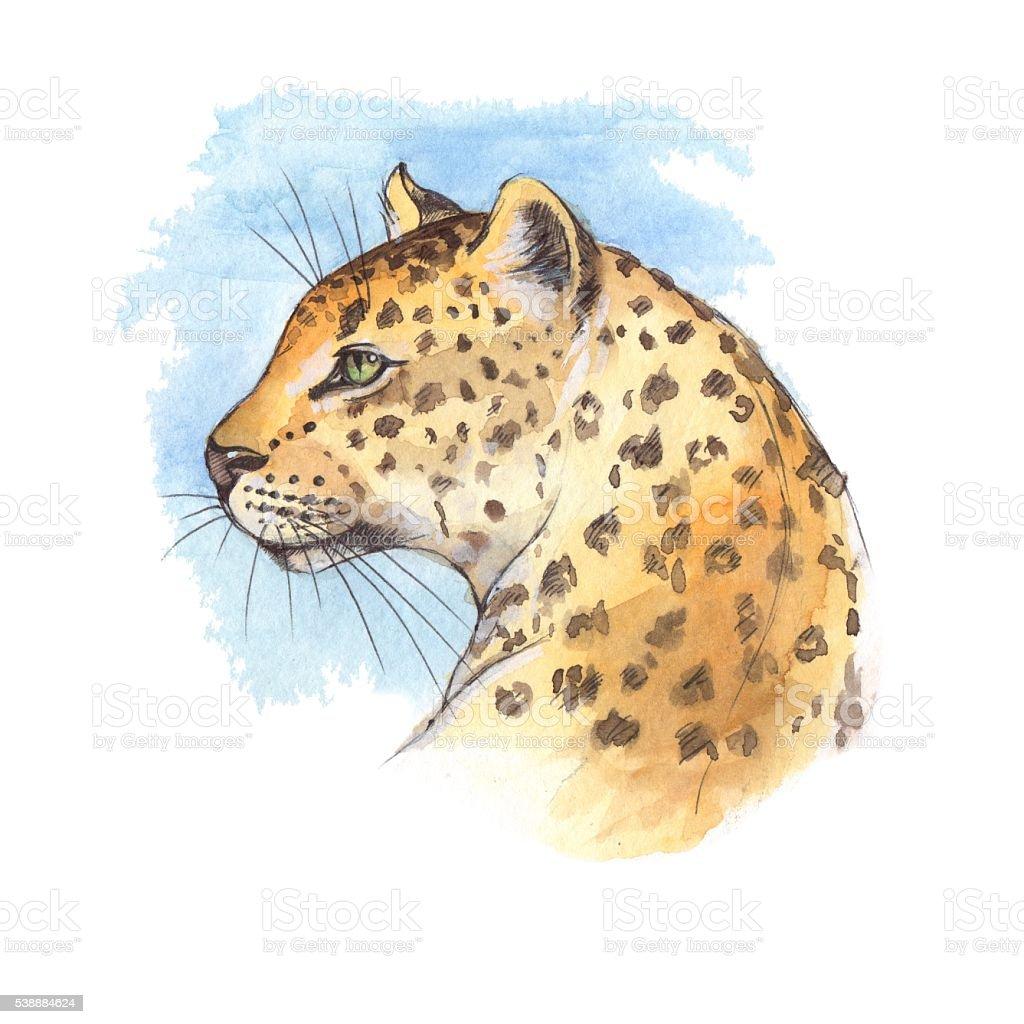 Vetores De Cabeca De Leopardo Desenho Aquarela 3 E Mais Imagens De