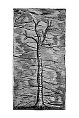 istock Lepidodendron is an extinct genus of primitive, vascular, tree-like plants, also known as scale trees, related to the quillworts and lycopsids (club mosses) 1306165355