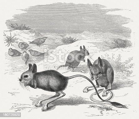 istock Lesser Egyptian jerboa (Jaculus Jaculus), wood engraving, published in 1875 180725520
