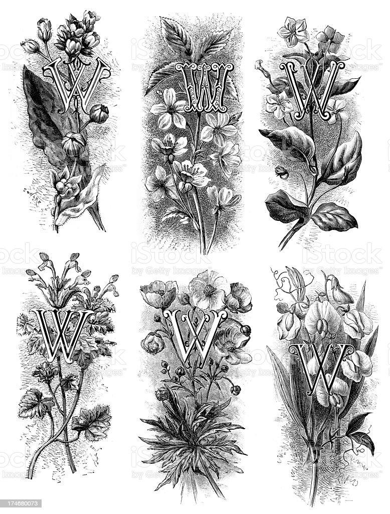 Letter W - Flower Font royalty-free letter w flower font stock vector art & more images of alphabet