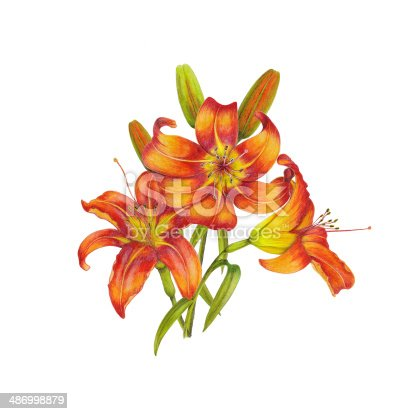 Watercolor bouquet of lilies on white background