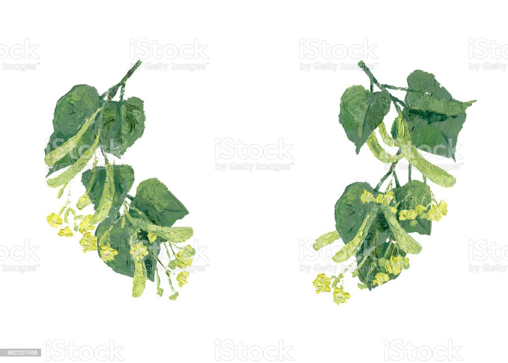 Ihlamur Yaprakları Ile Dallar Ve Illüstrasyon çiçekler Stok Vektör