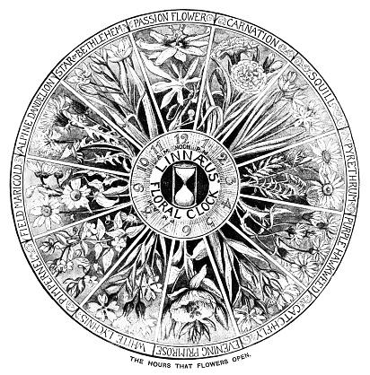 Linnaeus' floral clock - the hours when flowers open