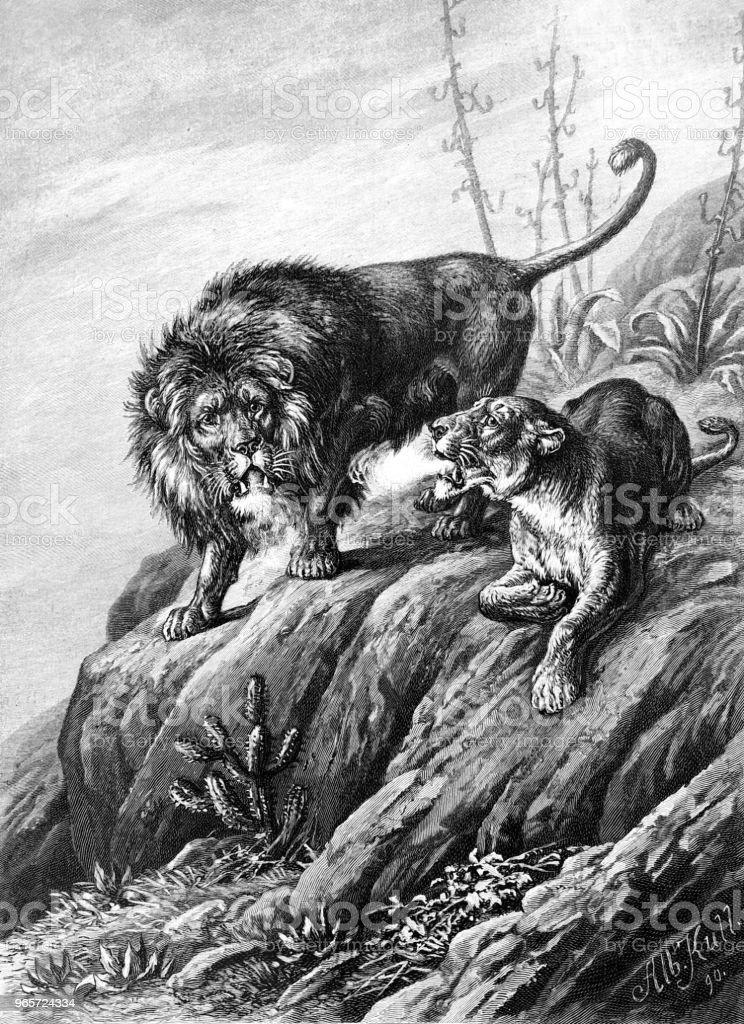 Lion couple in the wild vector art illustration
