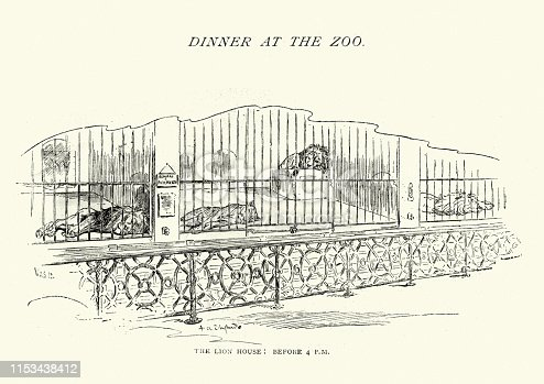 Vintage engraving of Lion house at London Zoo, Lions sleeping in cages, 1890s