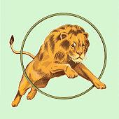 Lion Jumping Through Hoop