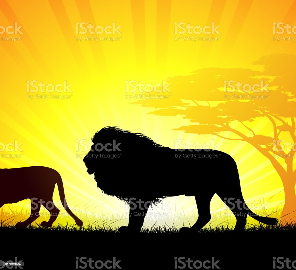 Lions vector art illustration