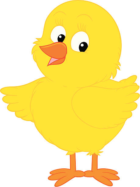 Baby chicken clip art vector images illustrations istock