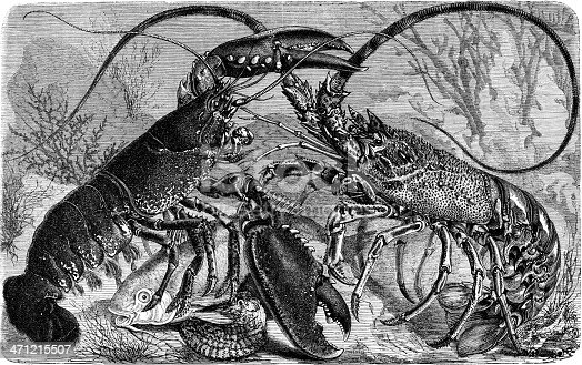 epic battle between lobster and langouste for fish