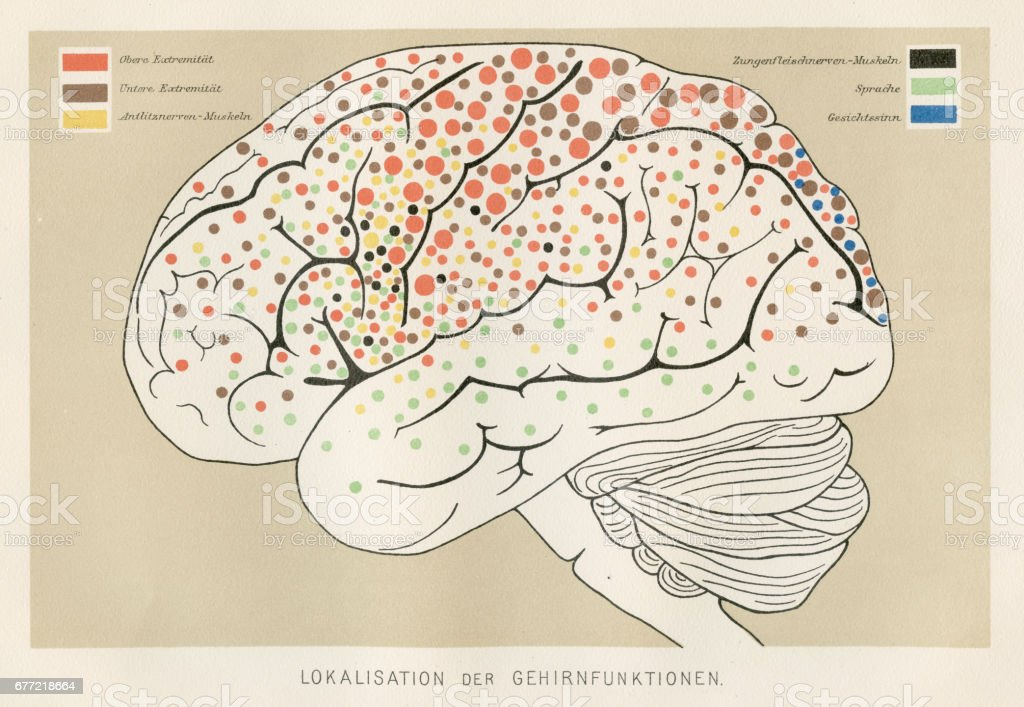 Localization Brain Functions Anatomy Engraving 1857 Stock Vector Art