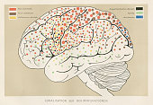 istock Localization brain functions anatomy engraving 1857 677218664