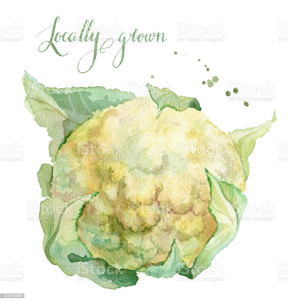 Locally grown cauliflower vector art illustration