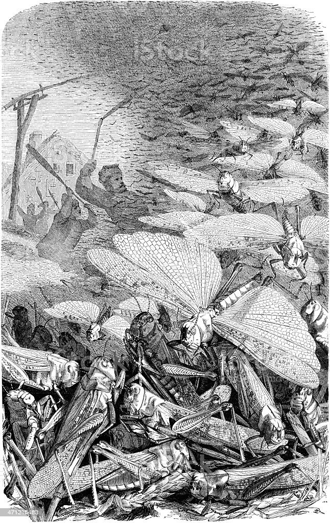 locusts swarm vector art illustration