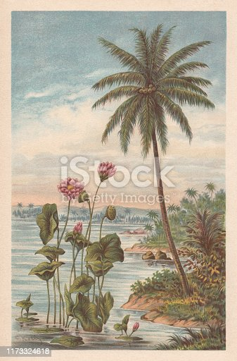 Lotus flower and coconut palm. Chromolithograph, published in 1894.