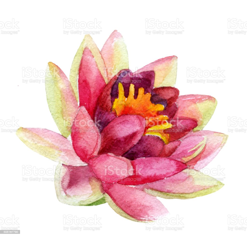 Lotus Flower Watercolor Stock Vector Art More Images Of Beauty