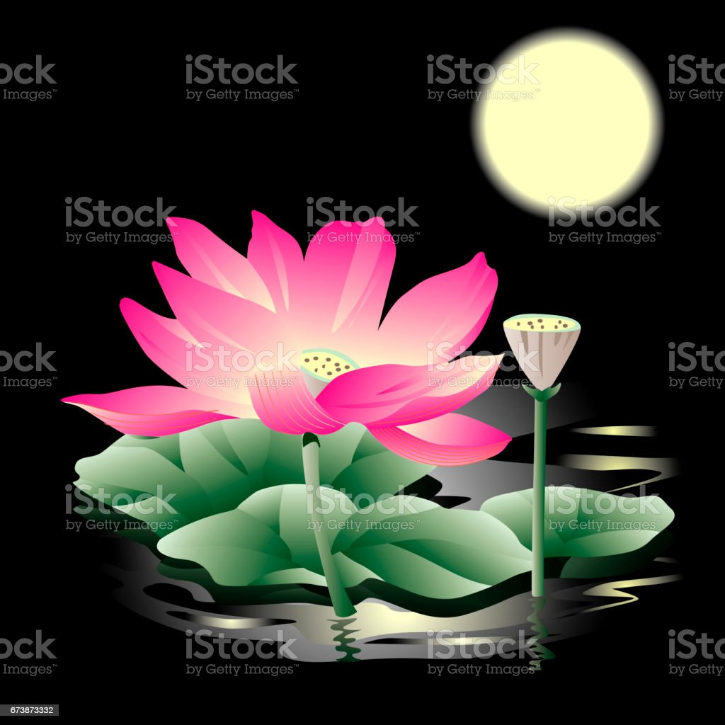 Lotus In Moonlight Stock Vector Art More Images Of Flower