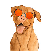 istock Lovable, pretty pet and sunglasses. Beautiful drawing 1272406426