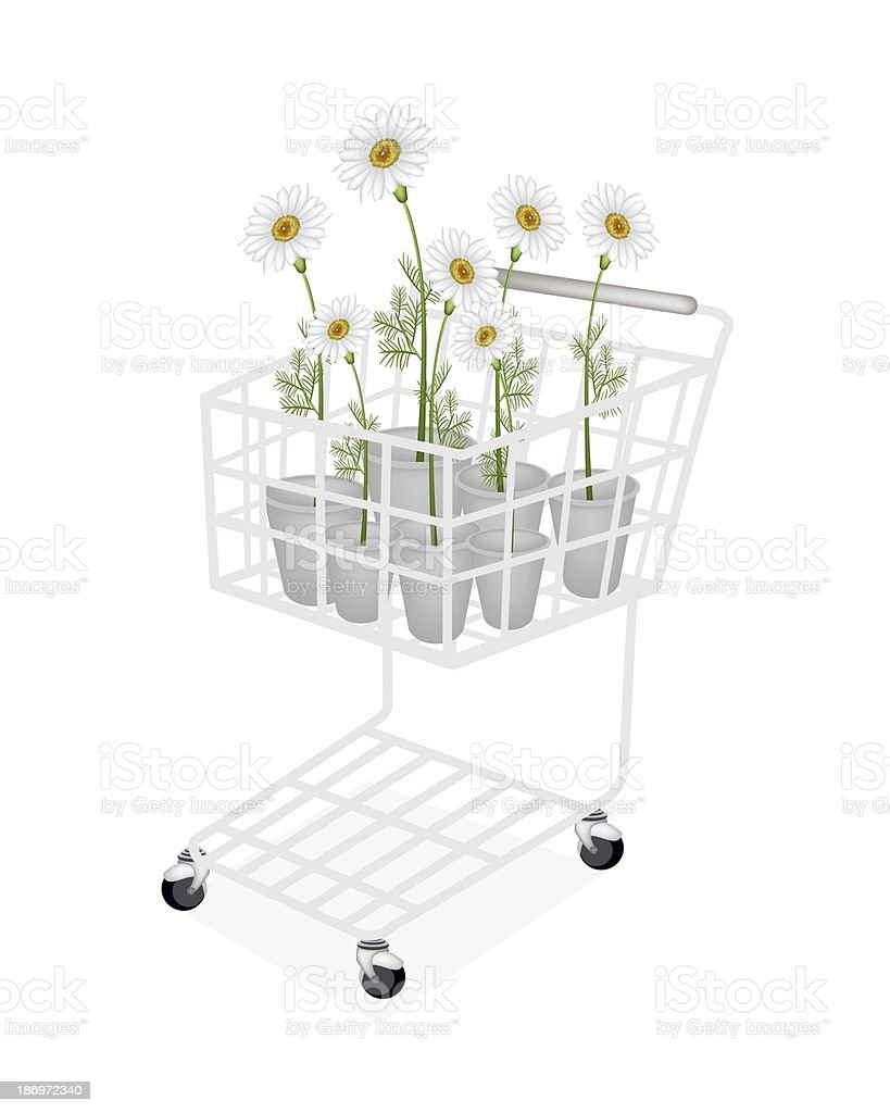 Lovely Fresh Chamomile in A Shopping Cart royalty-free stock vector art