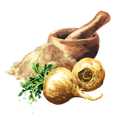 Maca Root Or Peruvian Ginseng With Powder And Mortar Organic Vegetable  Superfood Watercolor Hand Drawn Illustration Isolated On White Background  Stock Illustration - Download Image Now - iStock