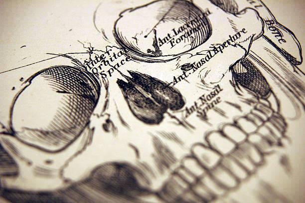 macro of a illustration of a human skull - autopsy stock illustrations, clip art, cartoons, & icons