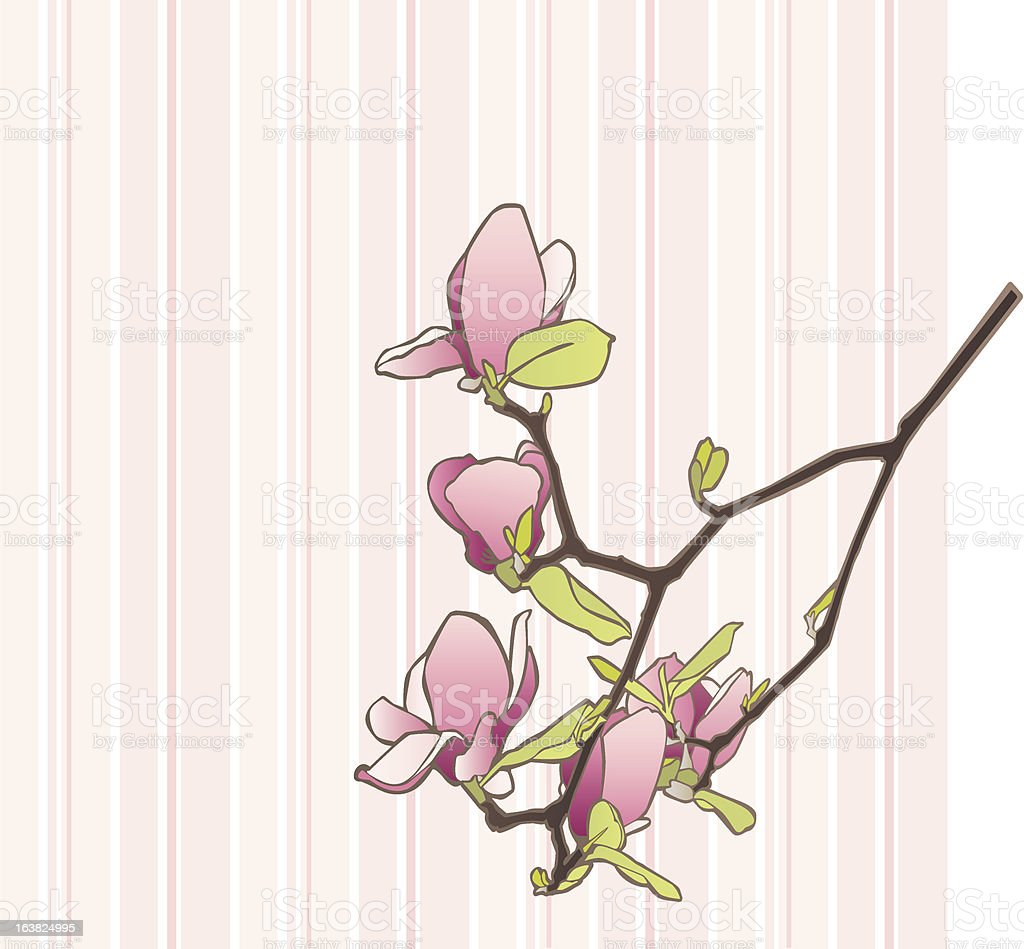 Magnolia Branch on Striped Background royalty-free magnolia branch on striped background stock vector art & more images of backgrounds