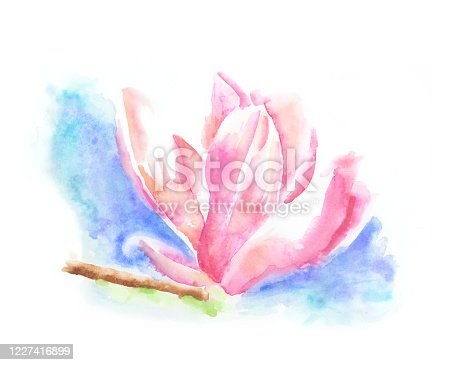 Magnolia Tree Flower Watercolor Painting. Vector EPS10 Illustration