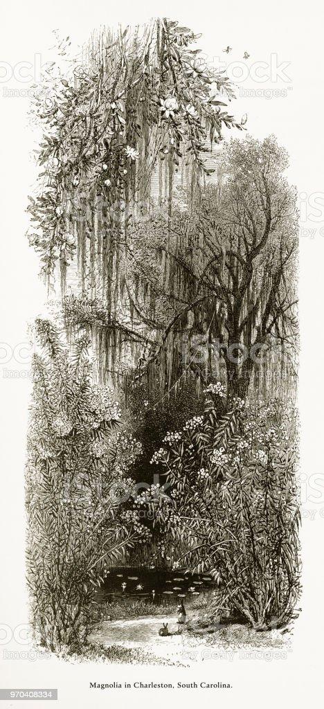 Magnólia na Ashley River, Charleston, Carolina do Sul, Estados Unidos, American vitoriana gravura, 1872 - ilustração de arte em vetor