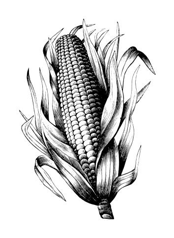 De Milho - Arte vetorial de stock e mais imagens de Agricultura