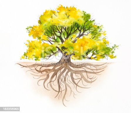istock Majestic Tree With Roots 183358965