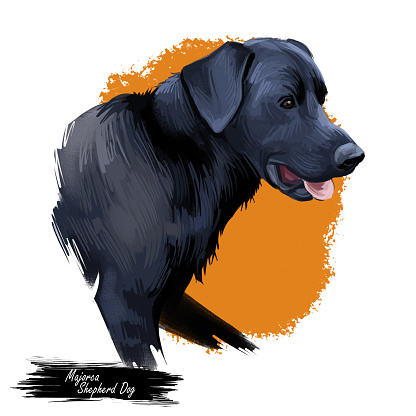 Majorca shepherd dog, perro de pastor digital art illustration. Pet originated in Spain, domestic animal mammal showing tongue. Ca de bestiar medium-sized canine breed with black fur.