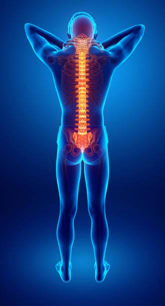 Male Feeling the back pain 3D Illustration of male Feeling the back pain backache stock illustrations