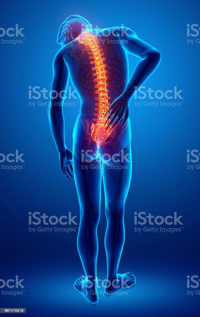 Male Feeling the back pain vector art illustration