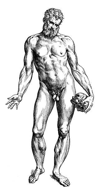 Männliche Nackt-Illustration von Andreas Vesalius – Vektorgrafik