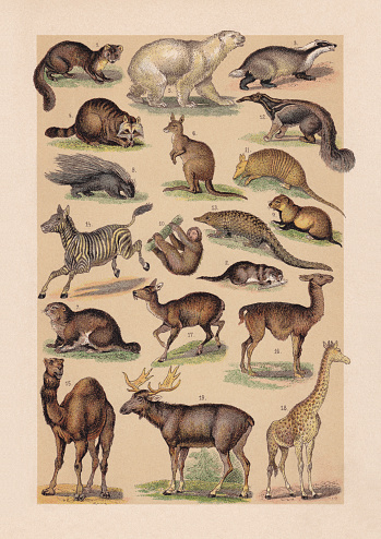 Mammals, chromolithograph, published in 1889