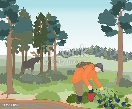 istock A man is picking berries in a forest. 862206058