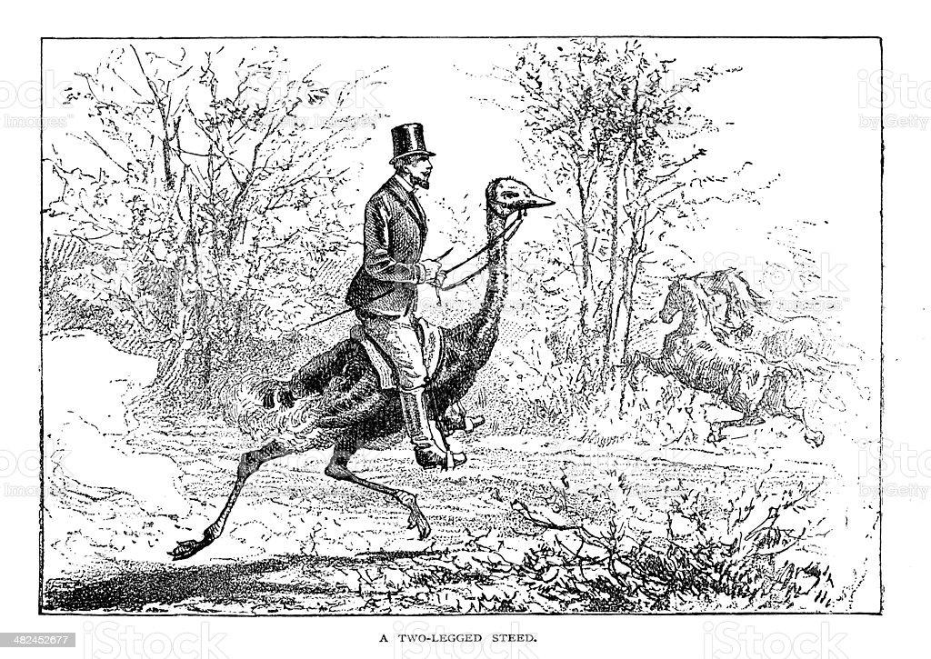 Man Riding Ostrich vector art illustration