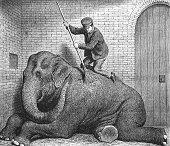 istock Man scrubbing the elephant in the zoo 1287403658