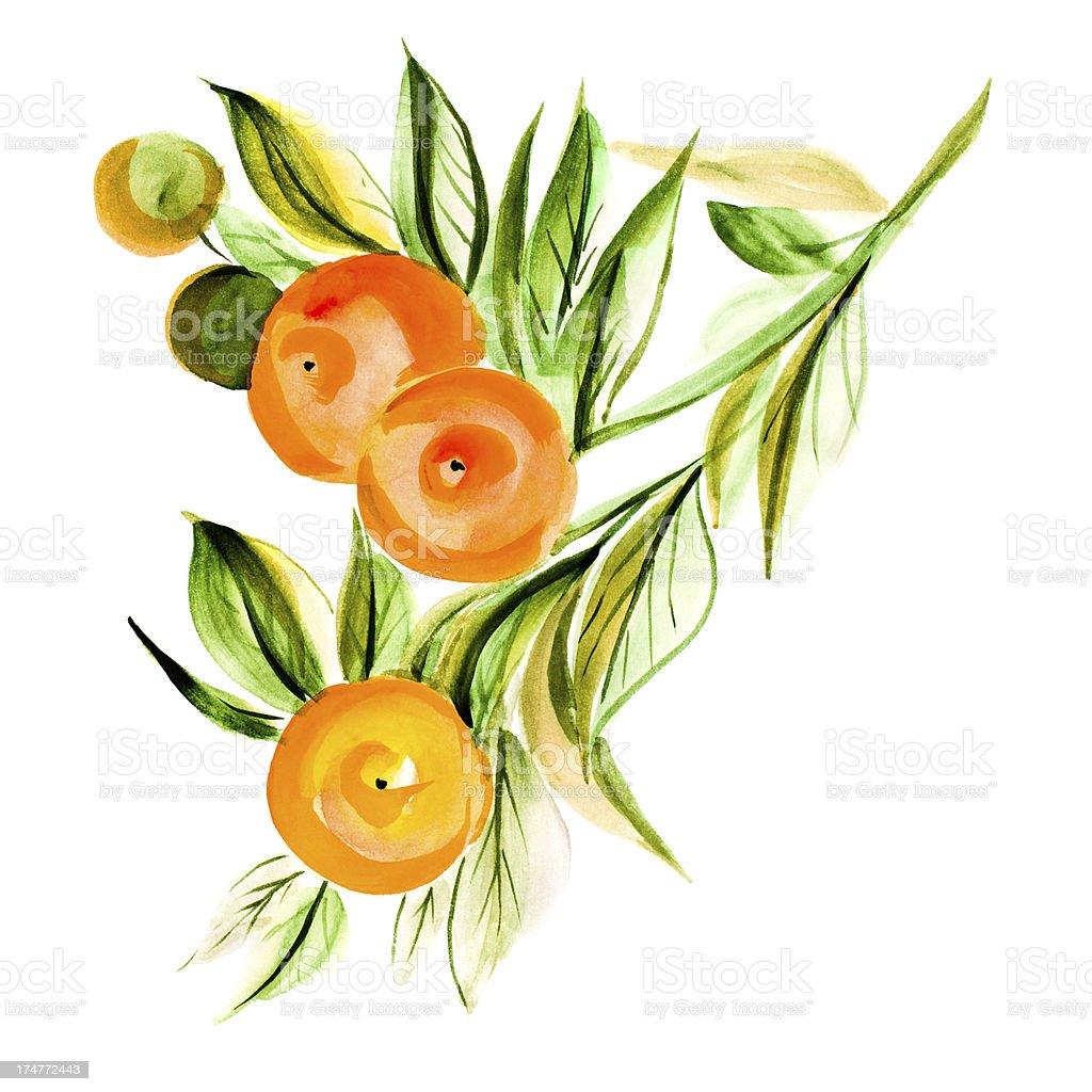 Mandarin vector art illustration
