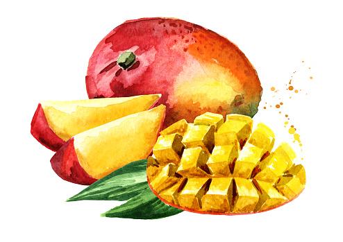 Mango fruit with mango cubes. Watercolor hand drawn illustration, isolated on white background