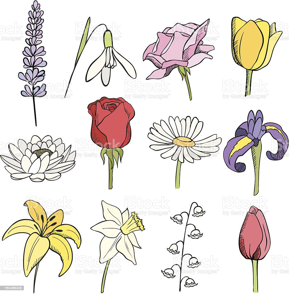 many different flowers royalty-free stock vector art