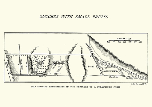 Vintage engraving of a Map of a strawberry farm, Drainage, 19th Century