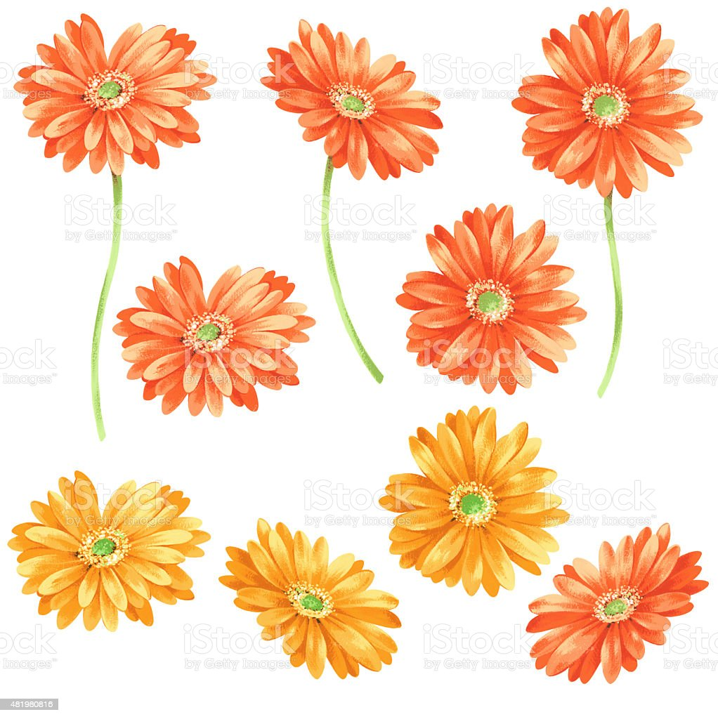 Marguerite illustration vector art illustration