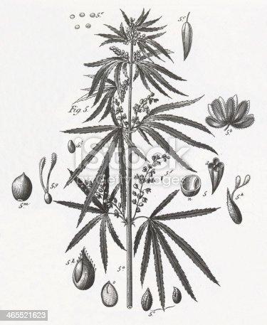 Money Plant Sketch