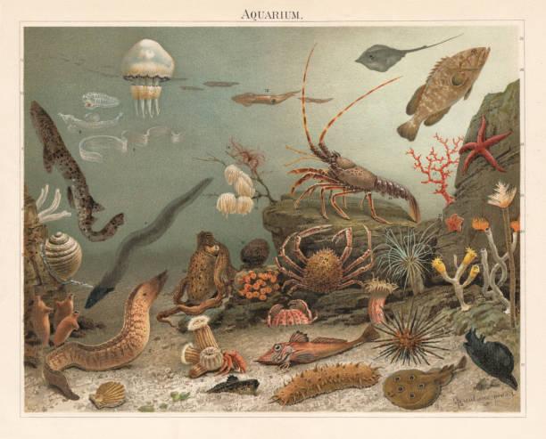 Marine aquarium in the Zoological Station Naples, litograph, published 1897 vector art illustration
