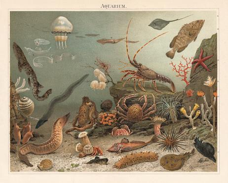 Marine aquarium, Zoological Station Naples, Italy, chromolitograph, published in 1897