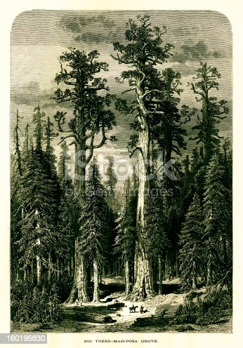 Mariposa Grove, located in Yosemite National Park, U.S. state of California. Published in Picturesque America or the Land We Live In (D. Appleton & Co., New York, 1872).