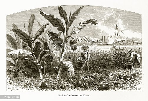 Very Rare, Beautifully Illustrated Antique Engraving of Market Garden on the Mississippi River, Louisiana, United States, American Victorian Engraving, 1872. Source: Original edition from my own archives. Copyright has expired on this artwork. Digitally restored.