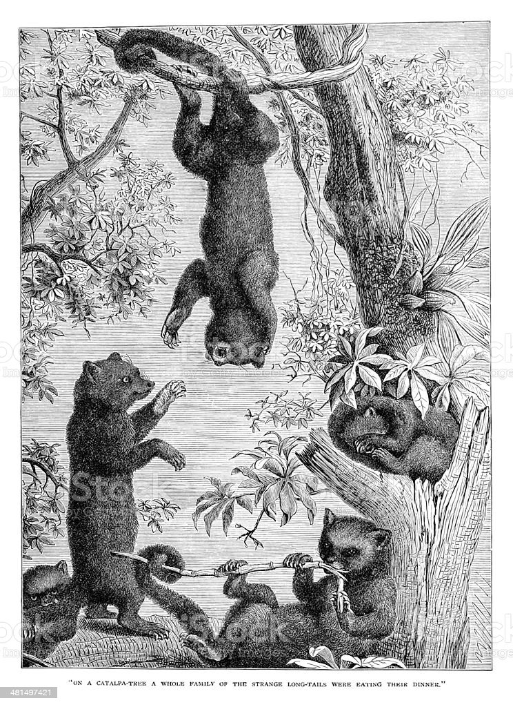 Marsupials Playing in a tree royalty-free marsupials playing in a tree stock vector art & more images of 19th century style
