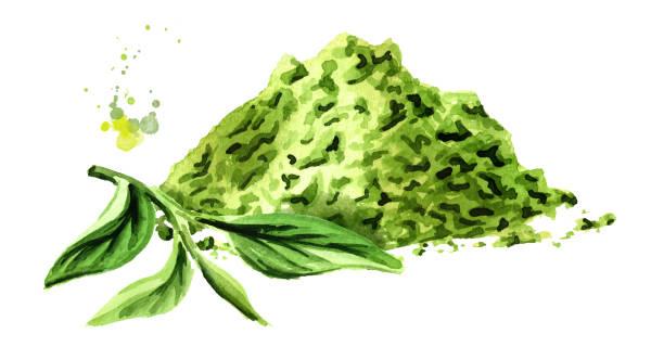抹茶茶粉末緑茶の葉します。水彩の手描きイラスト、白い背景で隔離 - 抹茶点のイラスト素材/クリップアート素材/マンガ素材/アイコン素材