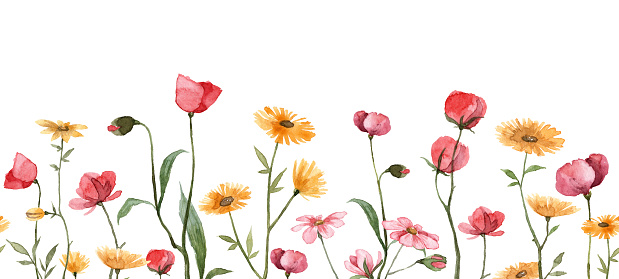 Meadow field with hand painted flowers. Cute floral banner